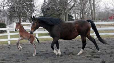 Filly with Rucellaa