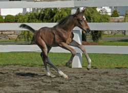 Cor d'Elise 2008 Filly