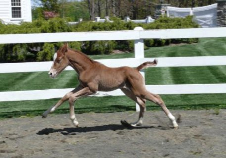 Wynona Filly, 2010