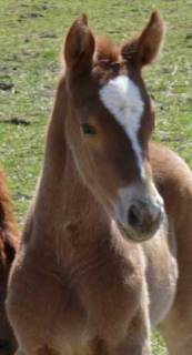 Wynonna Filly Headshot