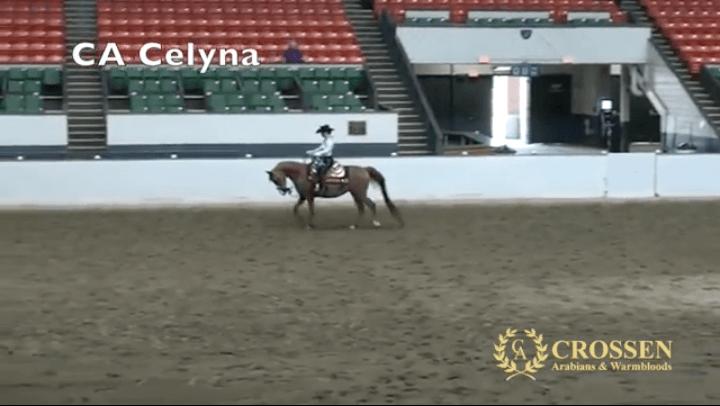 CA Celyna AHANE 2016