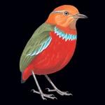 Birds of Borneo- Brunei, Sabah, Sarawak, and Kalimantan Icon