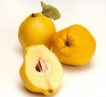 Membrillo fruto