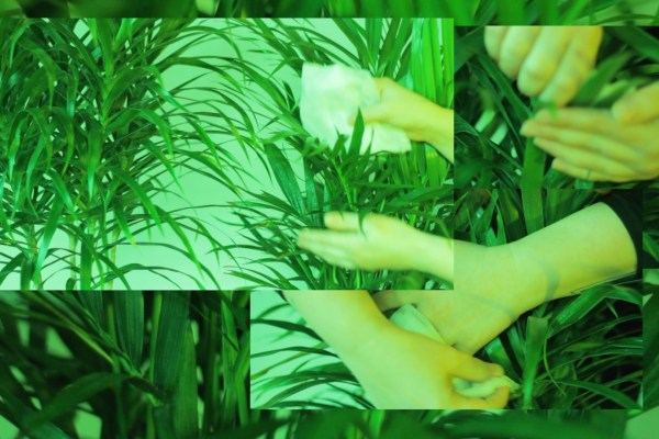 "Stephanie Acosta ""I Am A Potted Palm"". Photo credit: Stephanie Acosta"