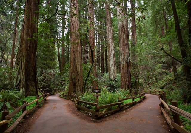 blotto muir woods
