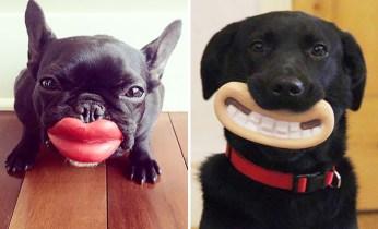 funnydog