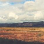 west_coast_field