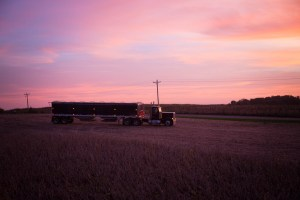 chippewa-valley-grain-transport-peterbuilt-semi-hopper-in-field