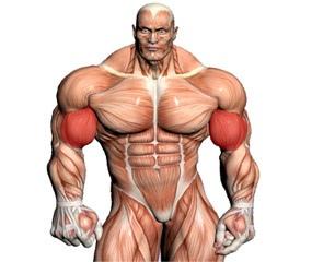 Arm Training Videos
