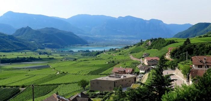 Vineyards below Passo Mendola