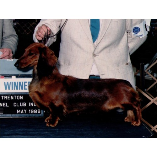 Medium Crop Of How To Pronounce Dachshund