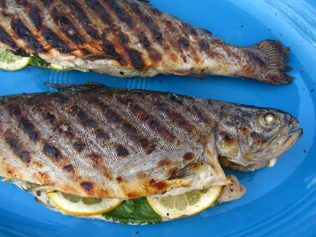 Fullsize Of Grilled Trout Recipes