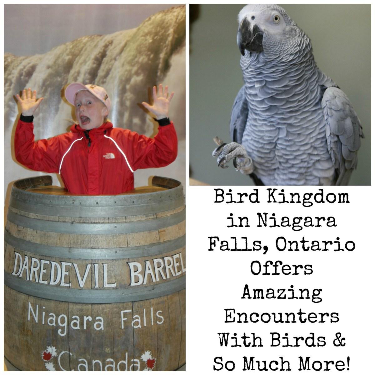 Bird Kingdom In Niagara Falls Ontario Is Amazing!