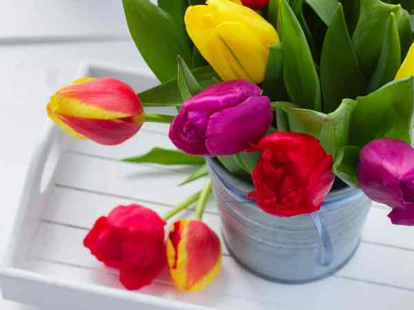 tulips on tray