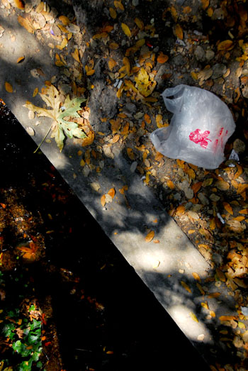 A plastic bag sits on the bank of Strawberry Creek.