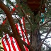 Littlebird occupies a tree in People's Park.
