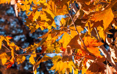 Fall-Leaves_Michael-Drummond