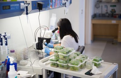 Inside the Corn Lab, part of the Innovative Genomics Institute, a program which receives industry funding.