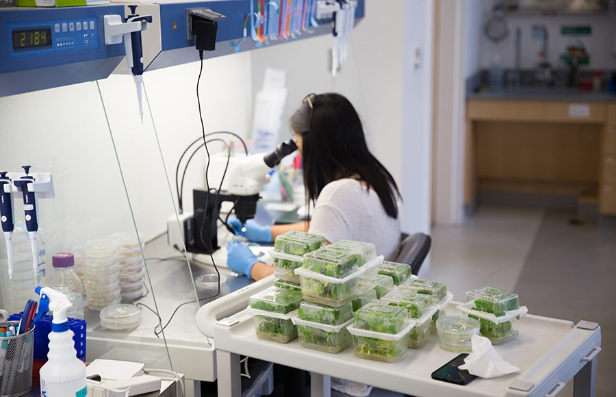 Industry-funded research takes on a larger role on a cash-strapped campus