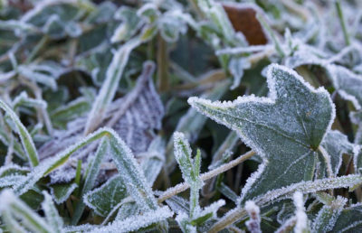 creativecommons_frost