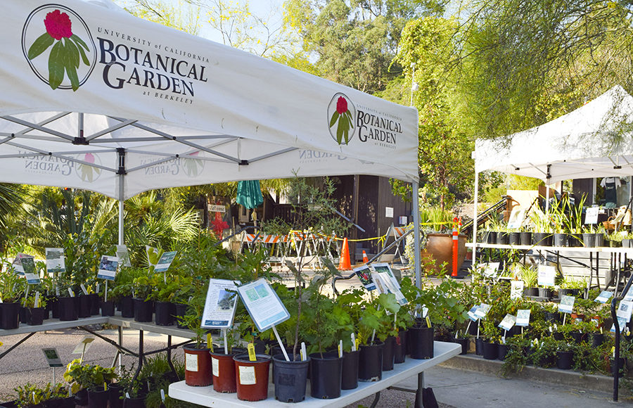 UC Botanical Garden holds annual Spring Plant Sale