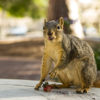 squirrel_haydenirwin_file