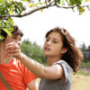 Two people stand under a tree, in a field, as one of them reaches to pick a berry falling from a low hanging branch.