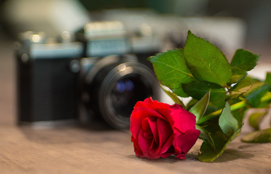 A rose and film camera