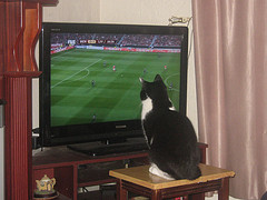 Moggy watching Europa Cup game: Benfica v Liverpool