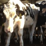A Fresh Start: 3 ways Dairy Moos will be improved in 2012