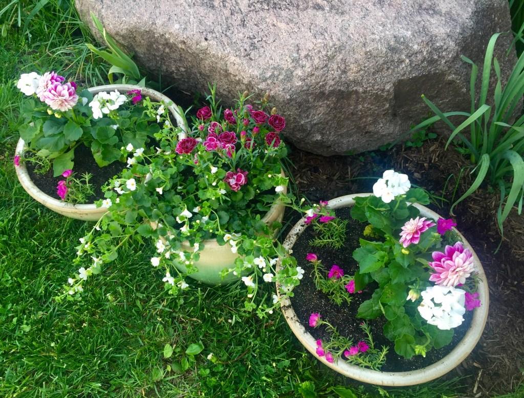 May Day gardening