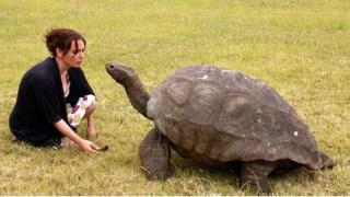 Jonathan, kura-kura beumur 182 tahun asal St Helena di Lautan Pasifik - Foto: BBC Indonesia