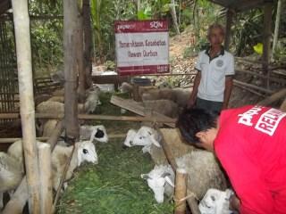 Pemeriksaan Hewan Kurban oleh tim PKPU Yogyakarta.  (PKPU/Jogja/Muthori)