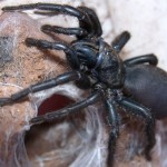 Two dead after venomous spiders invade Indian town