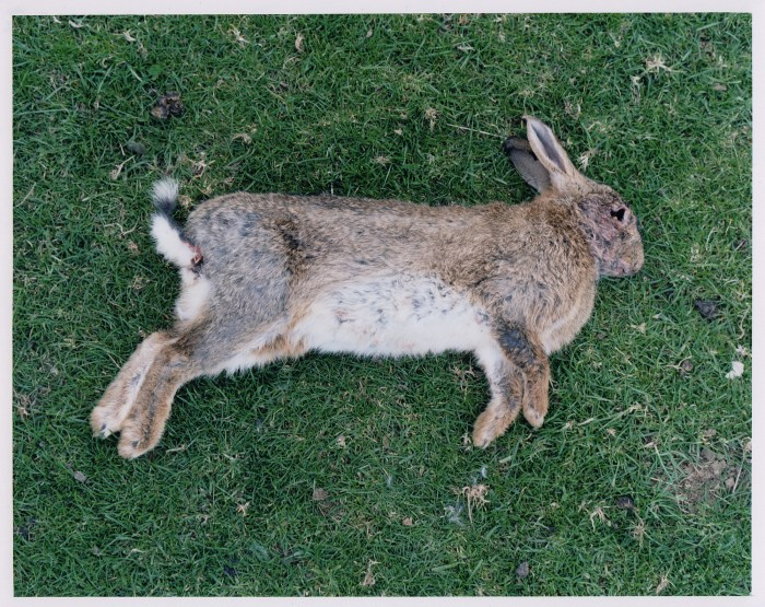 Rabbit, May 2013