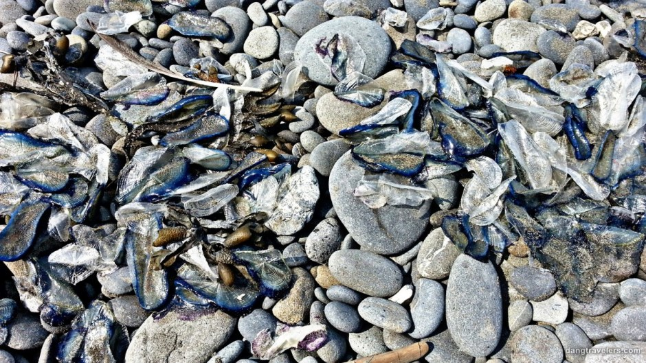 Sea Creatures - Olympic National Park