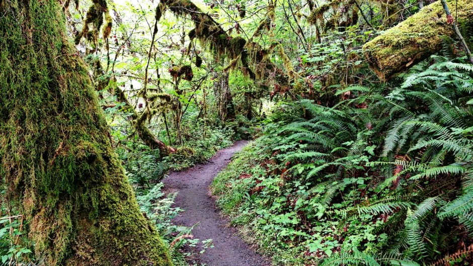 Trail in Hoh Rainforest - Olympic National Park