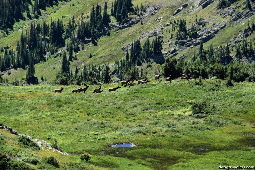 Rocky Mountain National Park (18)
