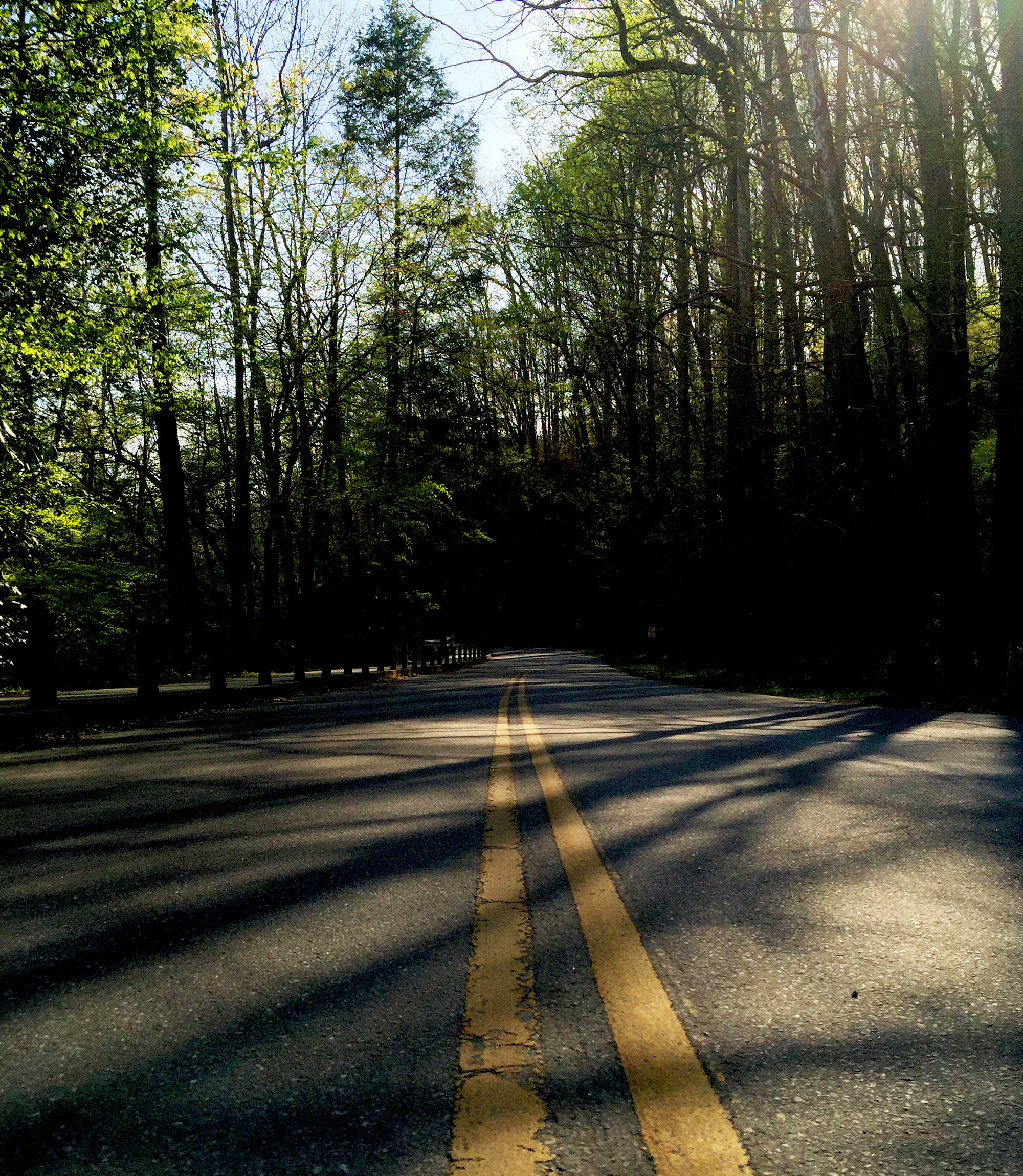 Deep Creek, Great Smoky Mountains / Darker than Green