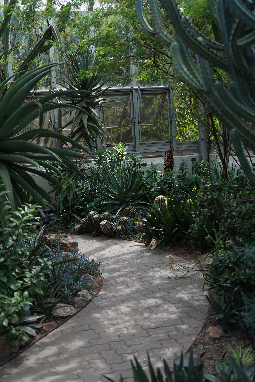 Desert house, Chicago Botanic Garden / Darker than Green