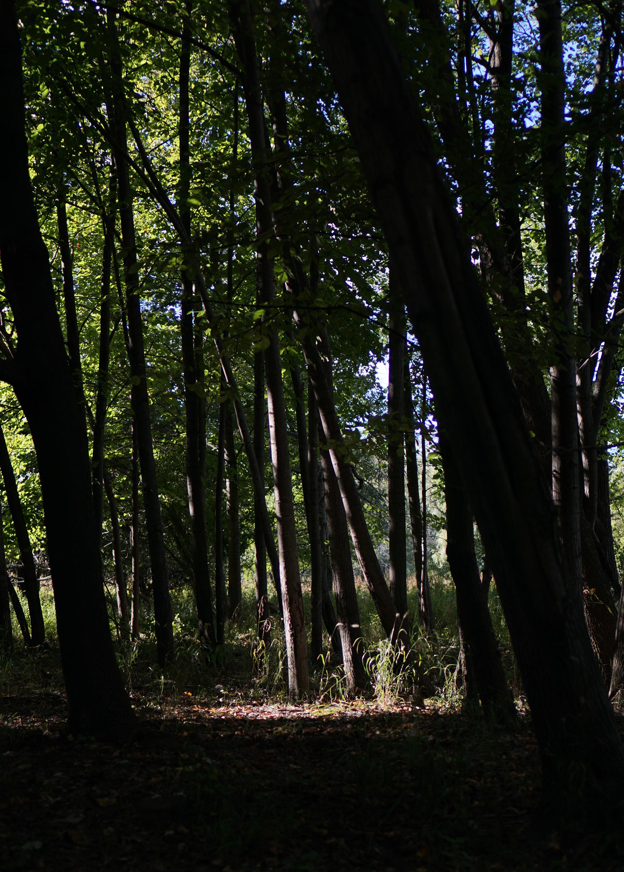 Tall trees, North Park Village Nature Center / Darker than Green