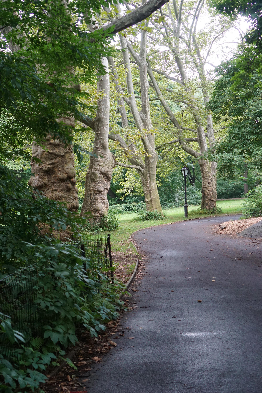 Iphigene's Walk, Central Park, New York City / Darker than Green