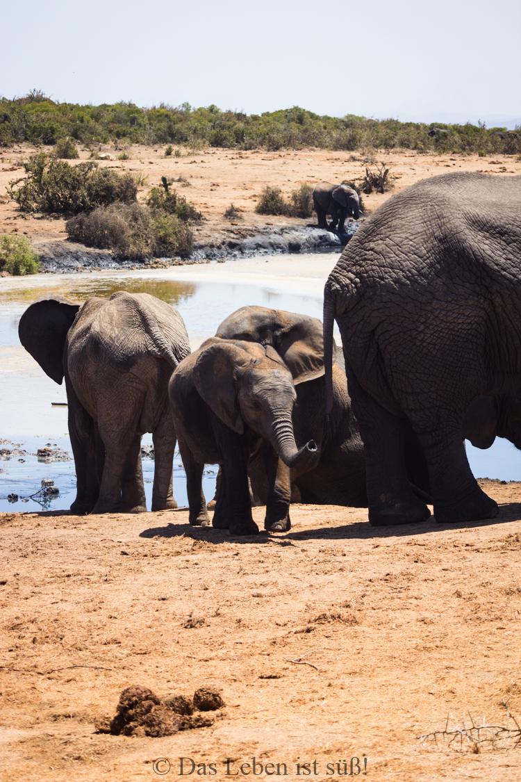 Addo Elephant Park (170 von 307)