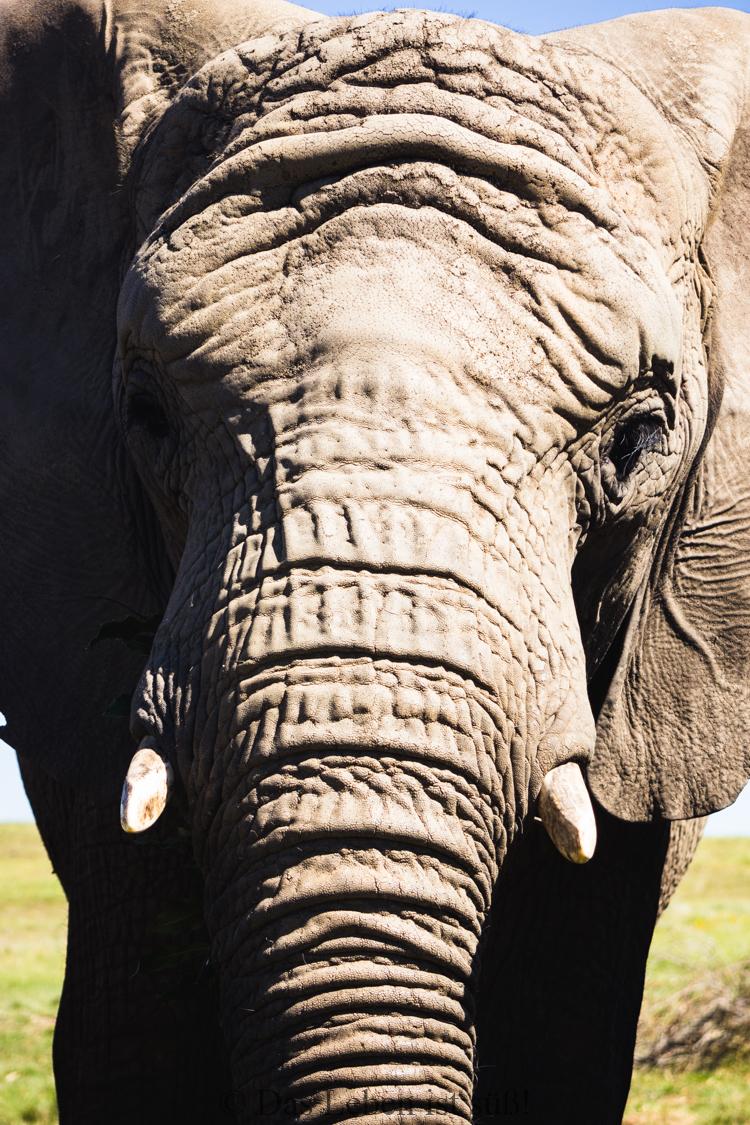 Knysna Elephant Park (67 von 93)