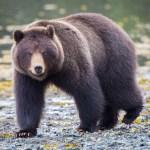 Bear Spray, Guns, and Bearanoia