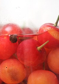 pickled sour cherries
