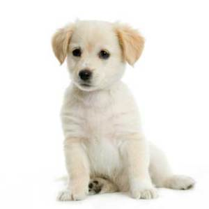 Fear of Dogs Hypnotherapy