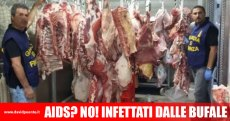 bufala-carne-infetta-aids