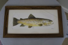 "$275 VALUE - ""Brown"" framed fish drawing by artist Joseph Butts"