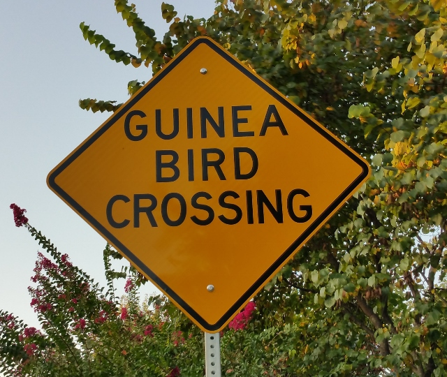 Guinea fowl crossing sign